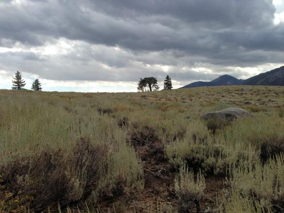 """The Grandma Tree"" at Valentine Eastern Sierra Reserve"