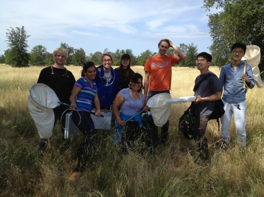 EVE 180 after a fun day of sweep sampling arthropods on valley oak (Quercus lobata)