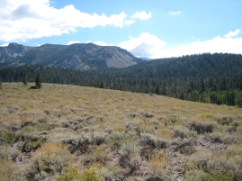 Sagebrush steppe at Valentine Eastern Sierra Reseve