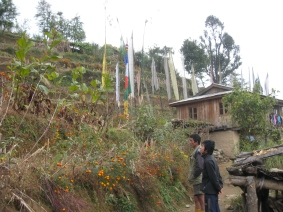 Farmers in Eastern Nepal cultivate rare folk-medicinal plants on terrace walls between food crops. This practice provides many farmers with their first cash crop and reduces harvesting from wild populations of the plants.
