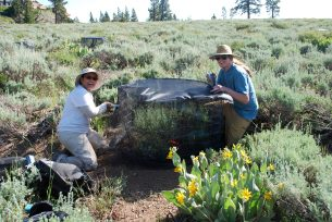 Building experimental cages over sagebrush